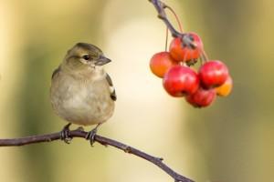 bird-983938_1280