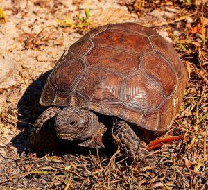 turtle-1523734_1280