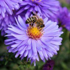 Tagebuch einer Biene – Ein Film über Honigbienen ab 7. Oktober 2021 im Kino